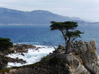 17 Miles Drive Lone Cypress
