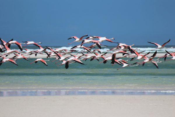 Direktflug Zu den Flamingos nach Aruba ab 458 EUR
