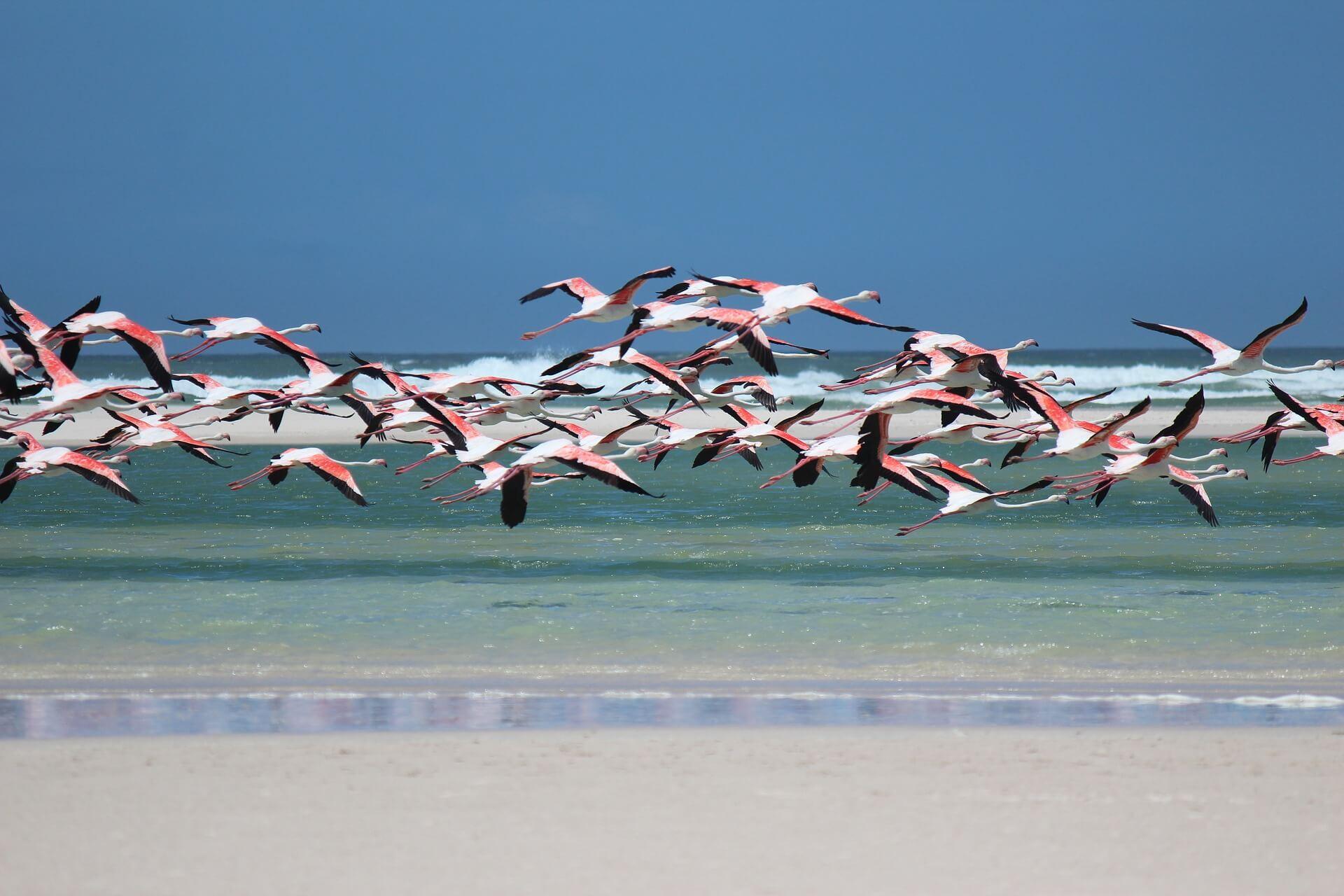 Direktflüge und Billigflüge nach Aruba (Oranjestad)