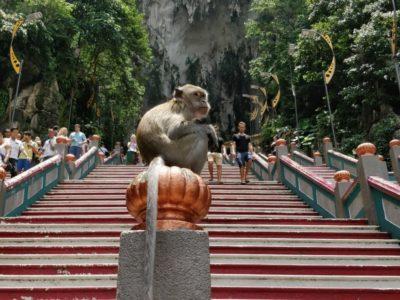 Affe Batu Caves Kuala Lumpur
