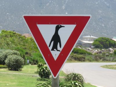 Bettys Bay Pinguine