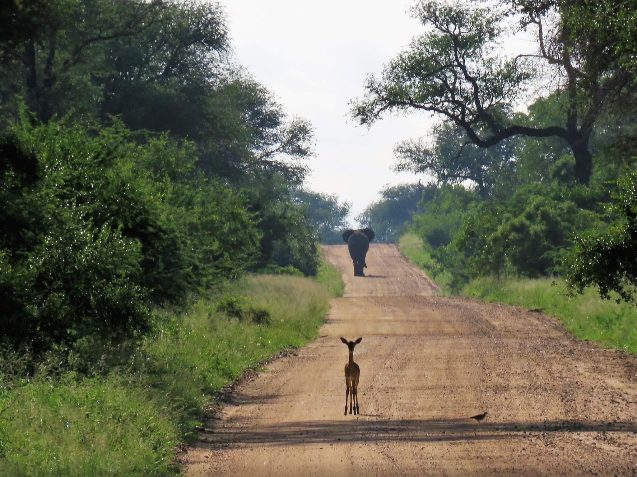 Südafrika – Von Johannesburg zum Krüger Nationalpark