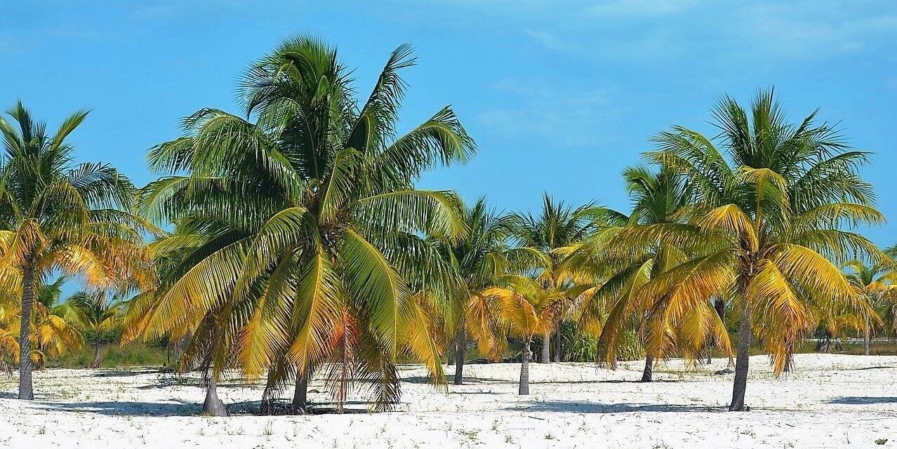 Direktflüge und Billigflüge nach Jamaika