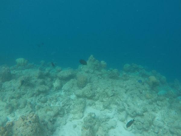 Unterwasserwelt Malediven